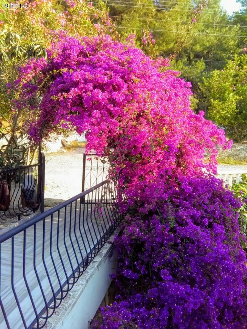 避暑山庄  销售 Türkiye的  Antalya