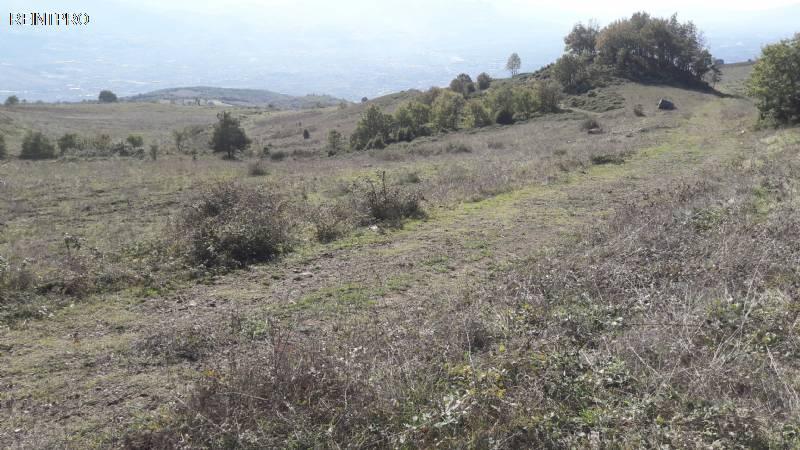 Land  FOR SALE Türkiye  Sakarya