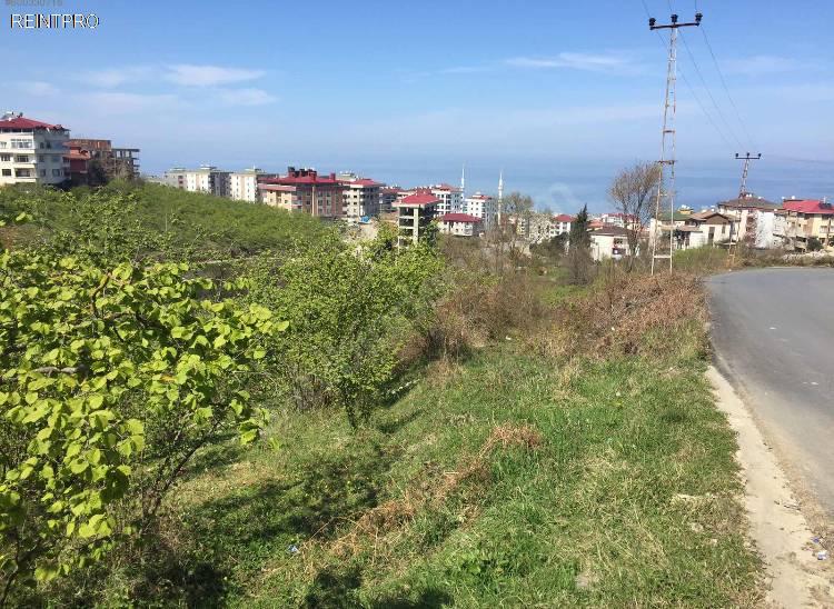Land FOR SALE Türkiye Trabzon 1 nolu Bostancı mahallesi Property Owner $10000002
