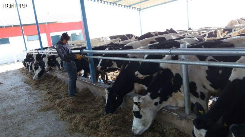 Farm  FOR SALE Türkiye  Manisa