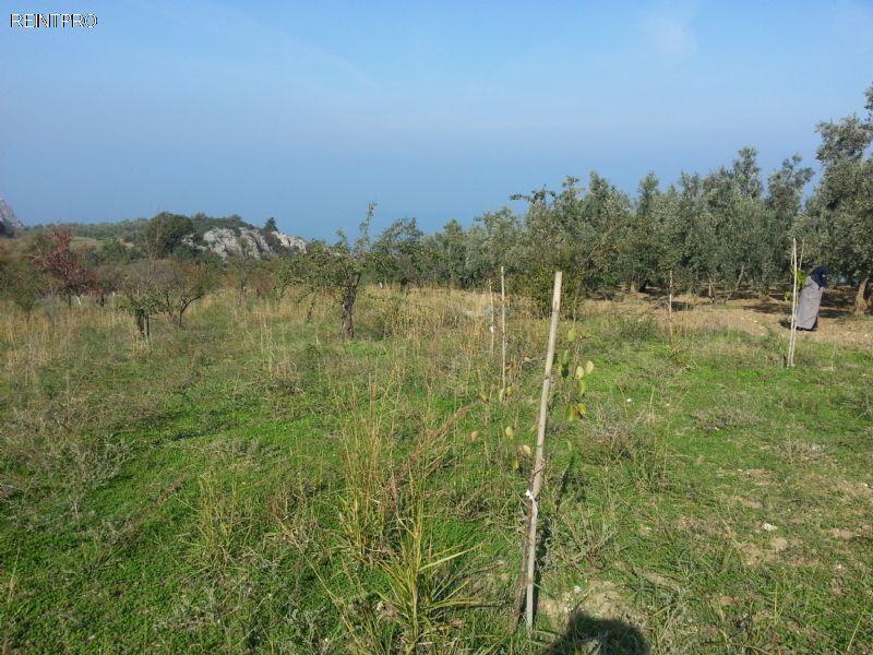 Land  FOR SALE Türkiye  Bursa